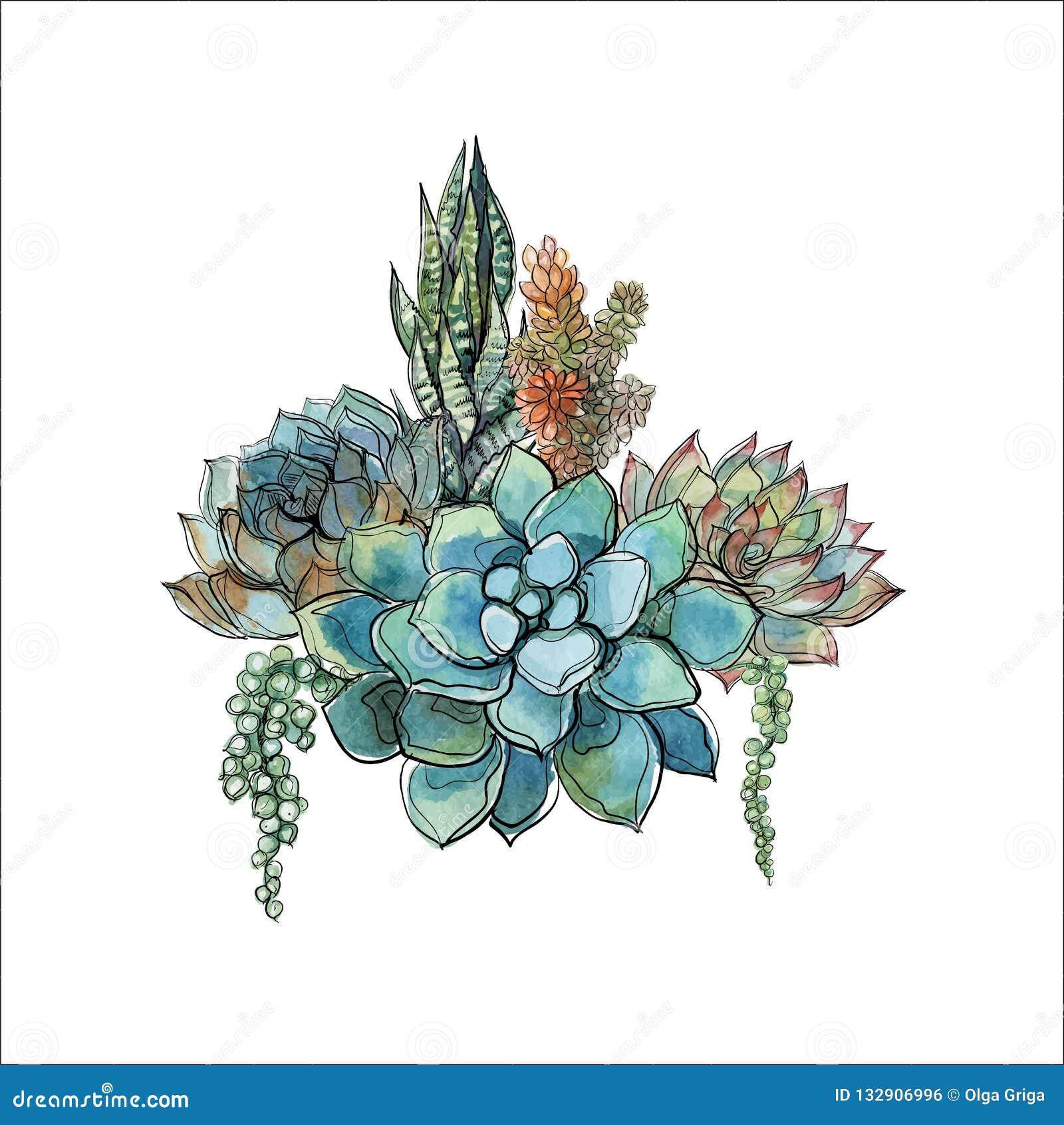Succulents Bouquet Stock Illustrations 2 219 Succulents Bouquet Stock Illustrations Vectors Clipart Dreamstime
