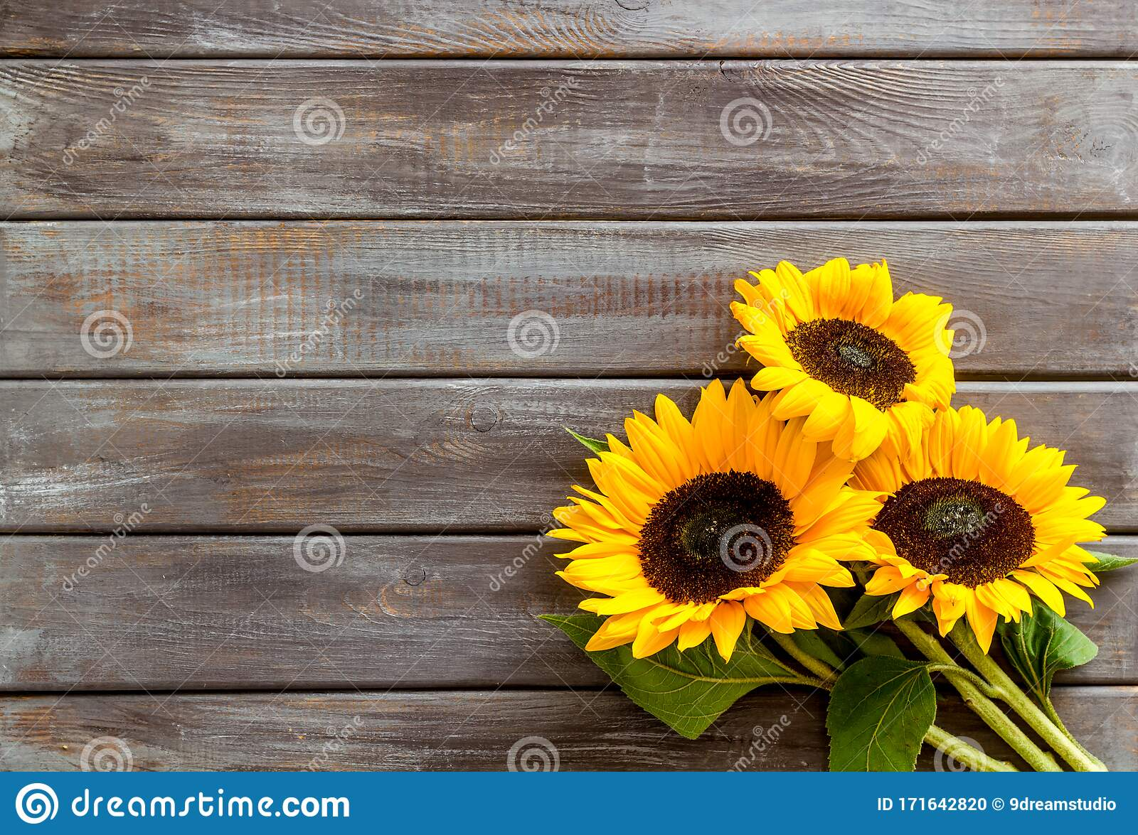 Bouquet Of Sunflowers On Dark Wooden Background Top Down Copy Space Stock Photo Image Of Mockup Topdown 171642820