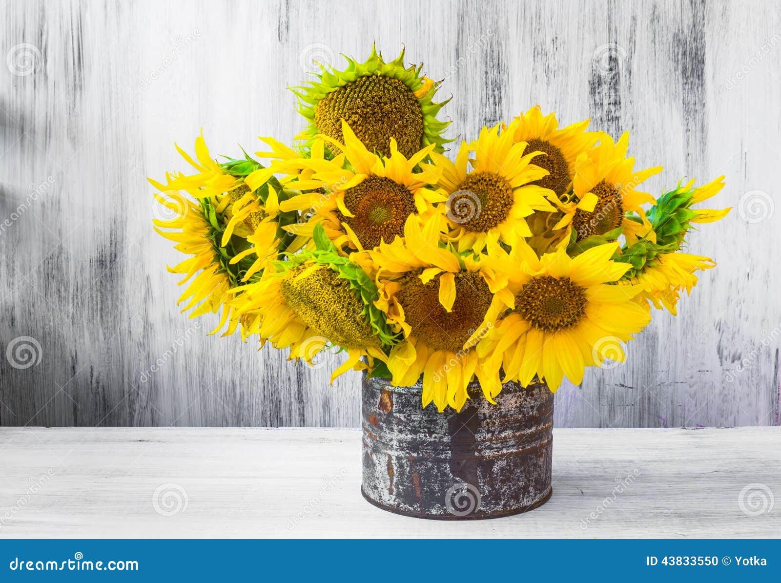 Bouquet Sunflowers Still Life Old Tin Stock Photo - Image ...