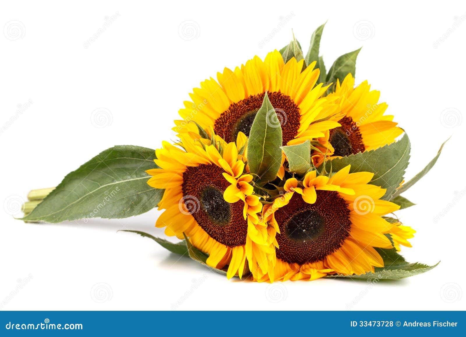 Bouquet Of Sunflowers Stock Photo Image Pollen Vibrant