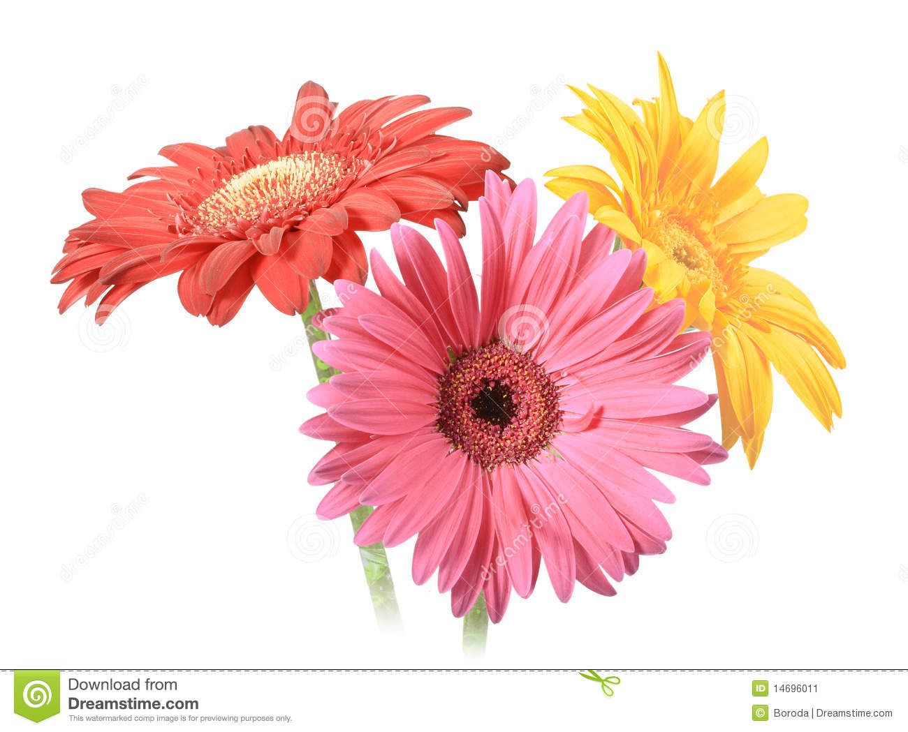 Bouquet Of Three Flowers Stock Image Image 14696011