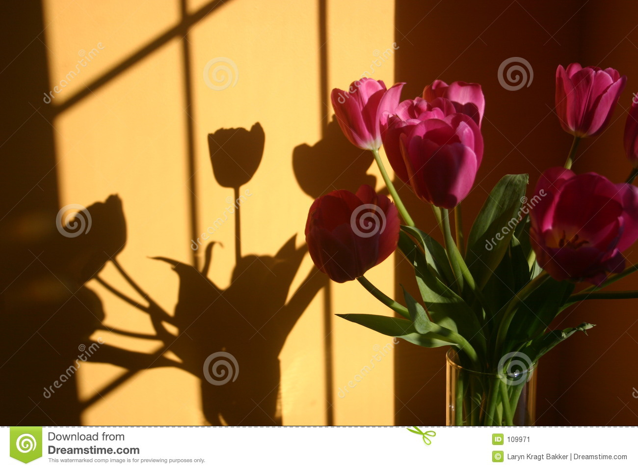 Bouquet of tulip flowers with shadow