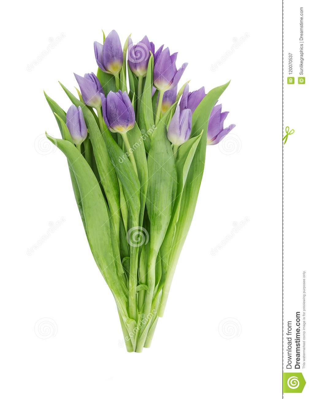 d10a8dda20e8b Bouquet Of Tulips Isolated On White Background Clipping Path Stock ...
