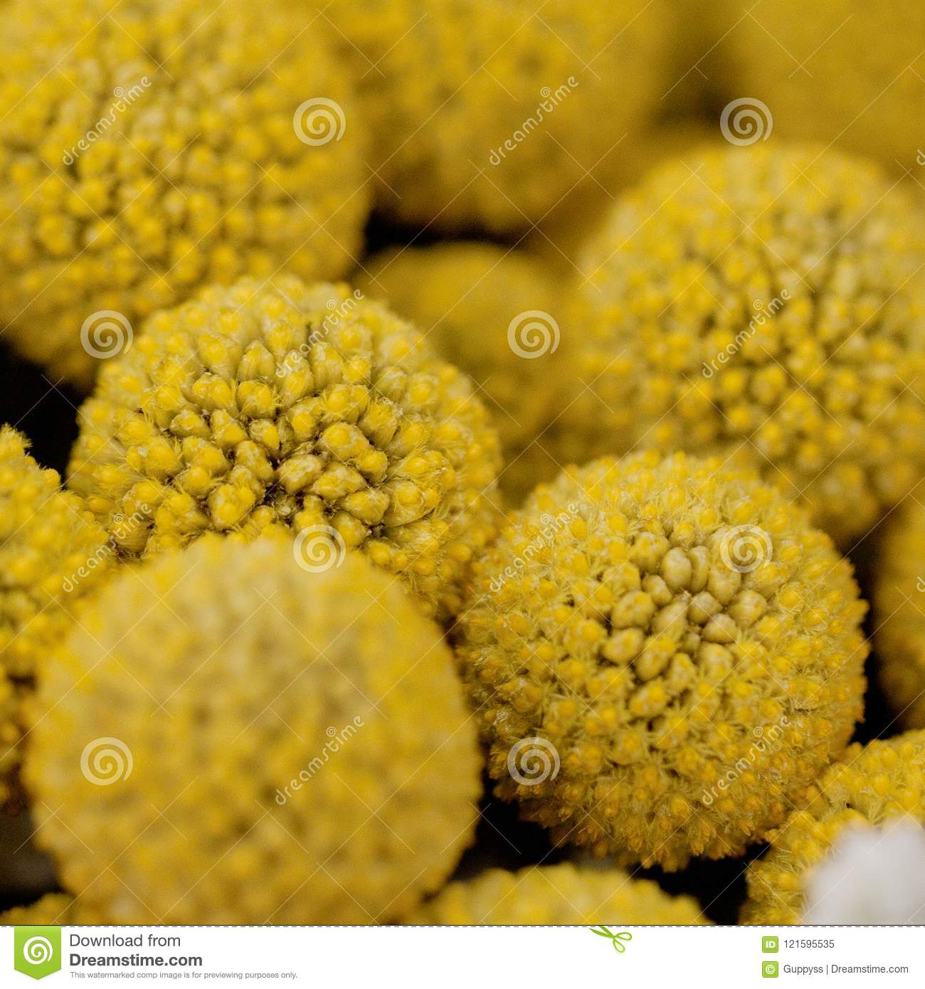 Bouquet of round yellow flowers close up stock image image of bouquet of round yellow flowers close up mightylinksfo