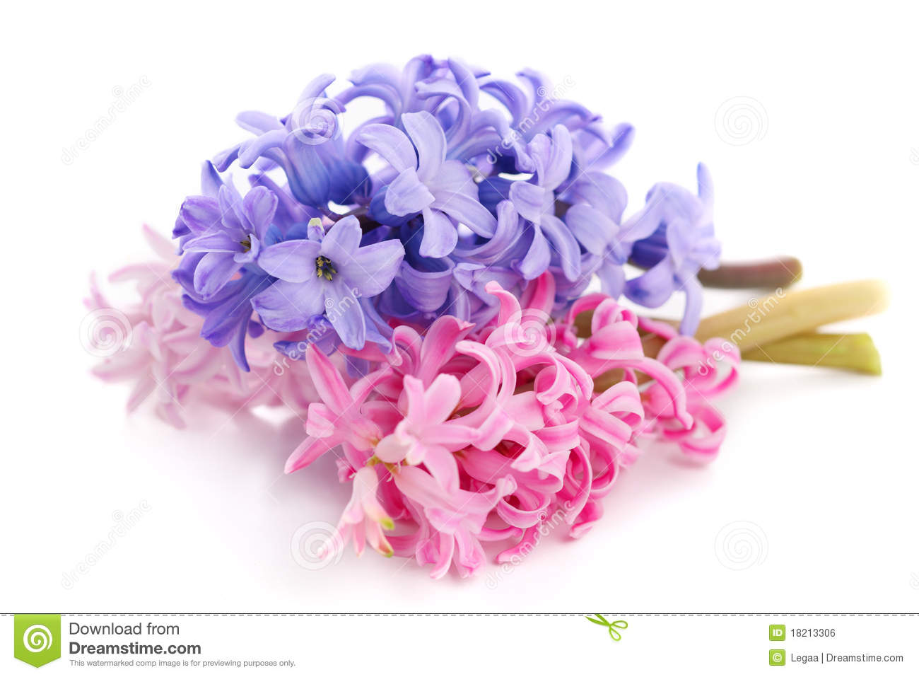 Bouquet hyacinth stock photo image 27762060 bouquet violet hyacinth royalty free stock image dhlflorist Choice Image