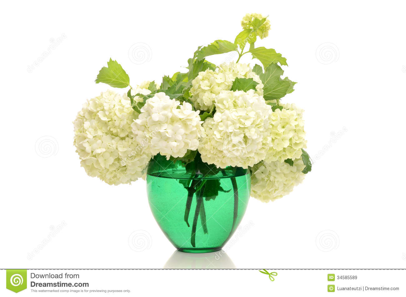 Bouquet of white flowers. stock image. Image of love - 34585589