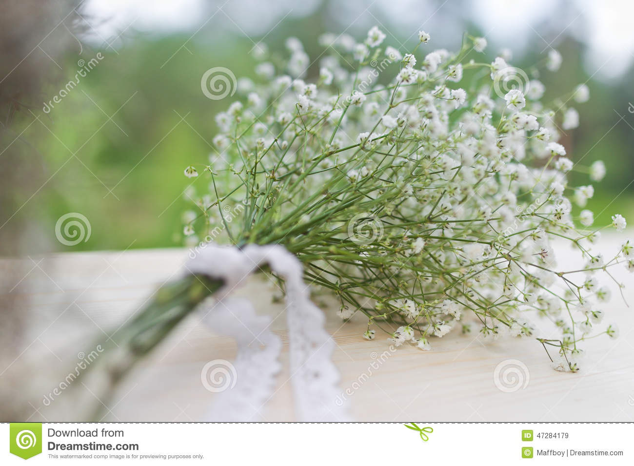 Bouquet Of White Gypsophila Flowers Stock Image Image Of Floral