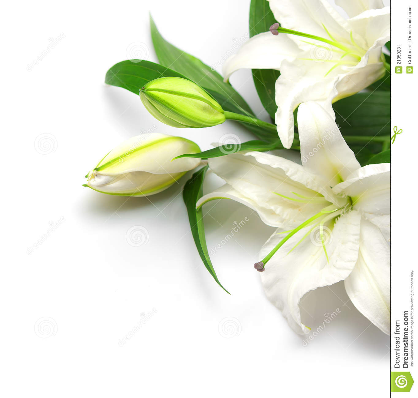 More similar stock images of ` Bouquet of white lilies `