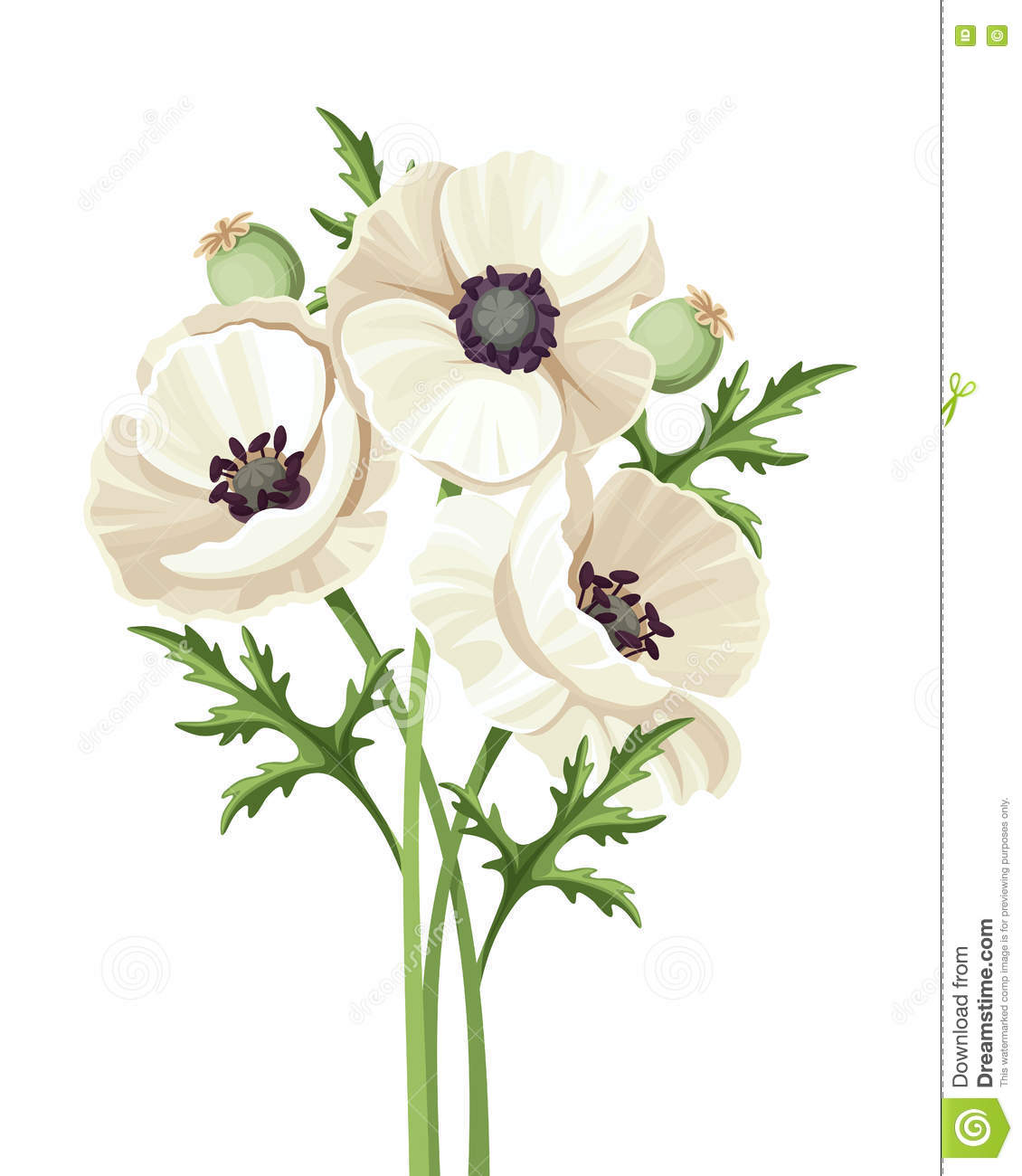 Bouquet Of White Poppy Flowers Vector Illustration Stock Vector