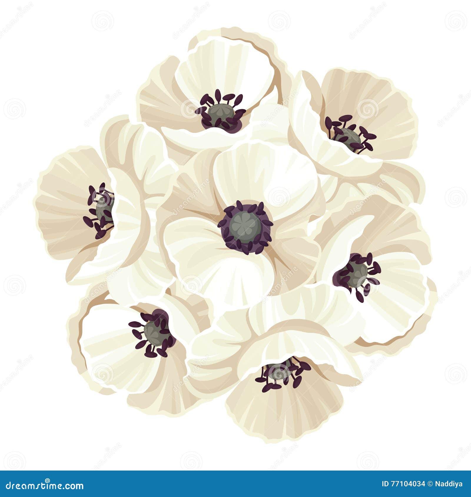 Bouquet Of White Poppy Flowers Vector Illustration Stock Vector
