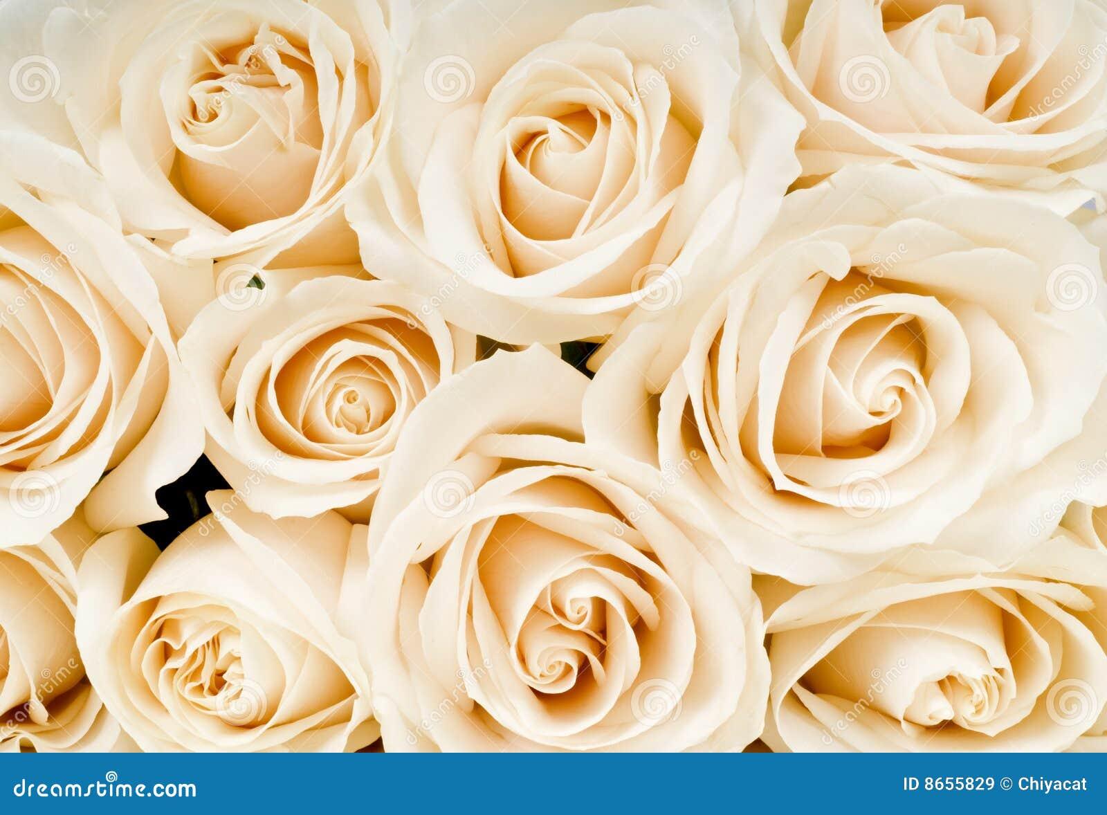 Bouquet Of White Roses Stock Image Image Of Macro Beautiful 8655829