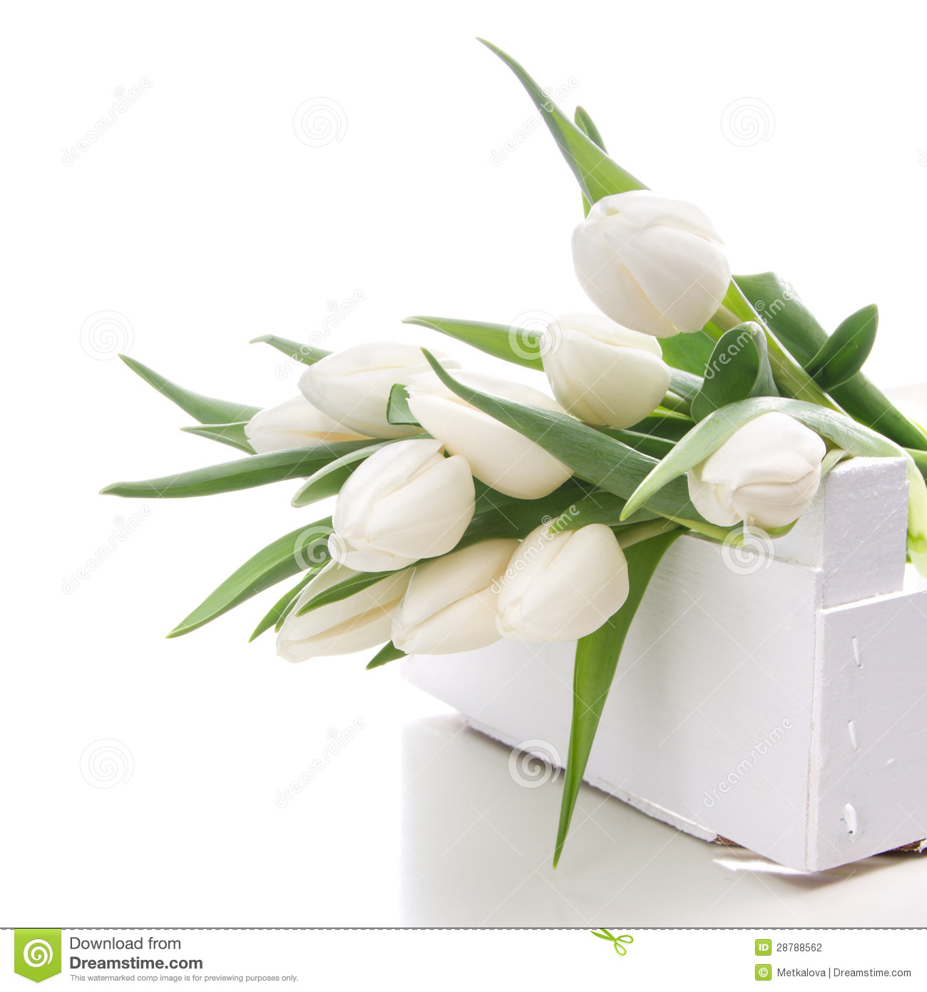 Bouquet Of White Tulips Over White Stock Photo