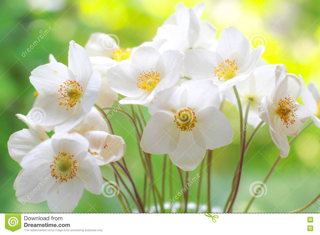 Bouquet of white wildflowers. Fresh flowers. Special occasions. Greeting cards, celebration, anniversary.
