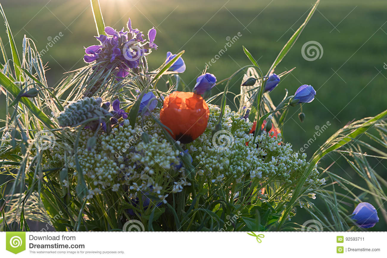 Bouquet Of Wild Spring Flowers Stock Image Image Of Decoration