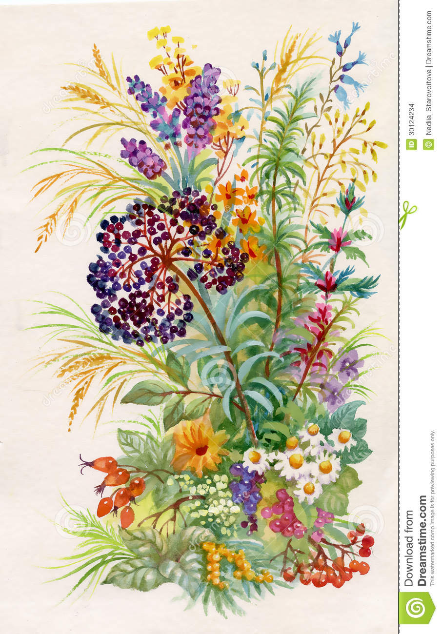 A Bouquet Of Wildflowers Stock Illustration Illustration