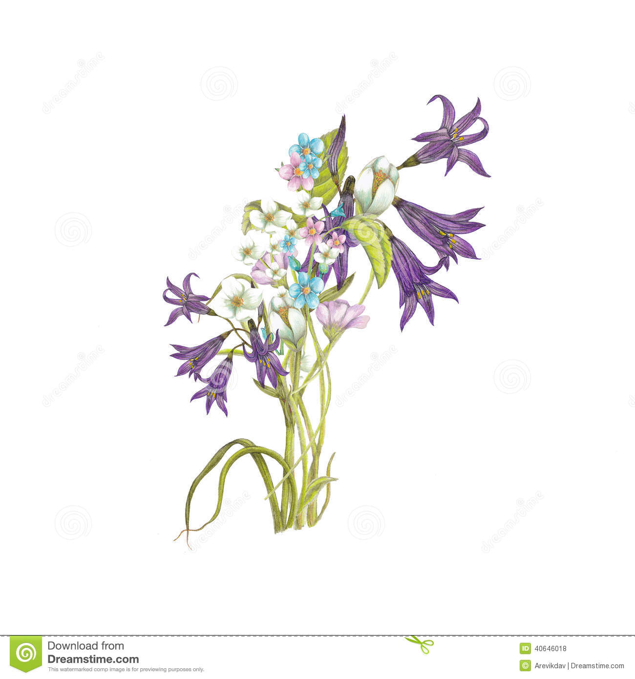 Bouquet Of Wildflowers Stock Illustration Image 40646018