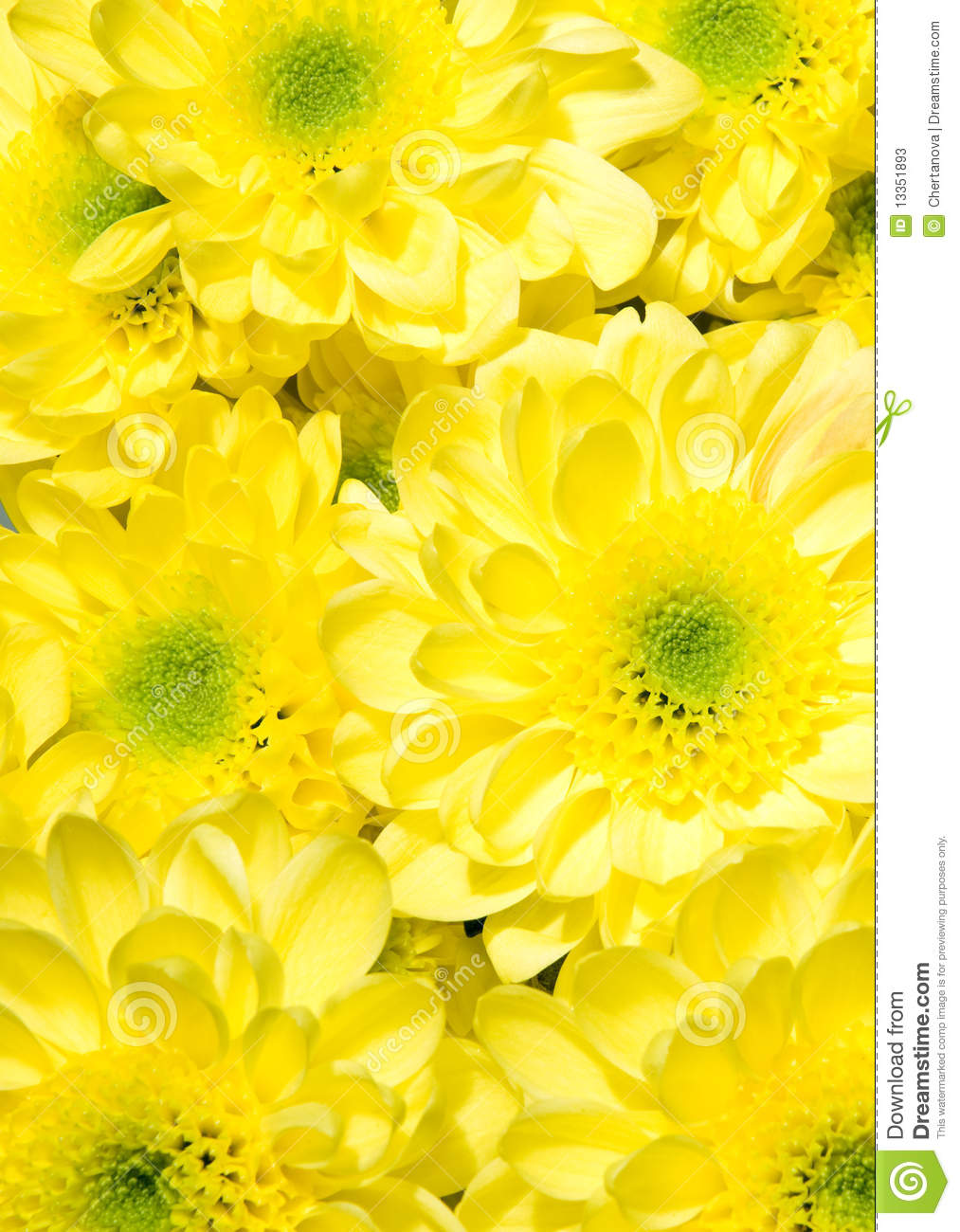 Beautiful christmas bells royalty free stock - Bouquet Of Yellow Chrysanthemums Stock Photos Image 13351893