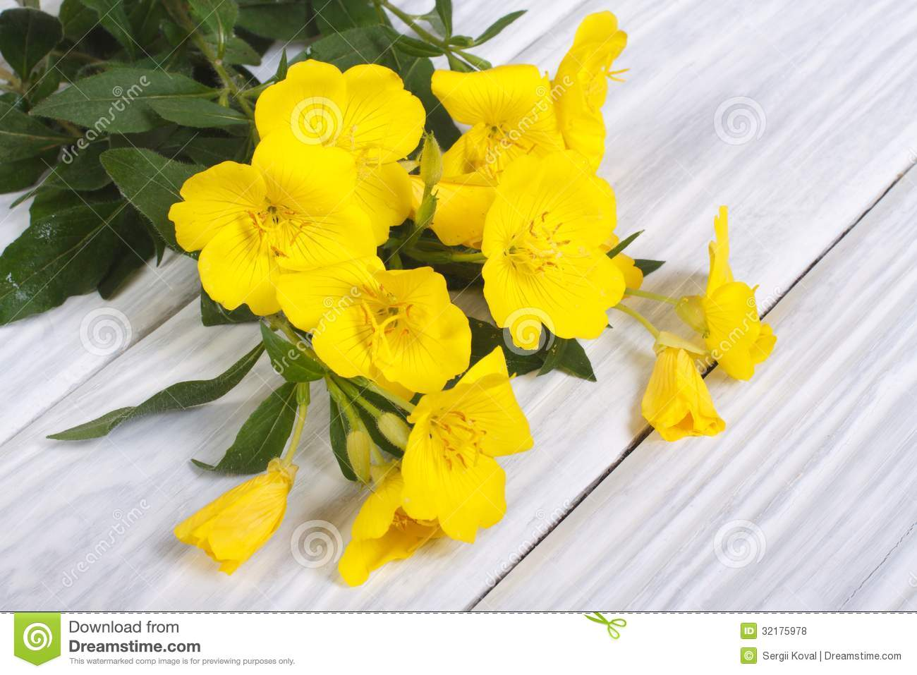 Bouquet of yellow flowers oenothera on a wooden table royalty free bouquet of yellow flowers oenothera on a wooden table royalty free stock photos image 32175978 dhlflorist Gallery