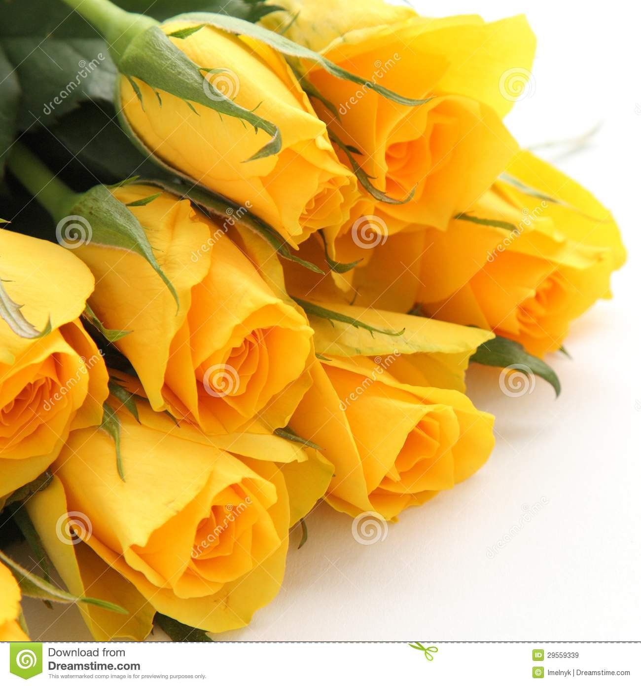 Bouquet Of Yellow Roses On White Background Royalty Free ...