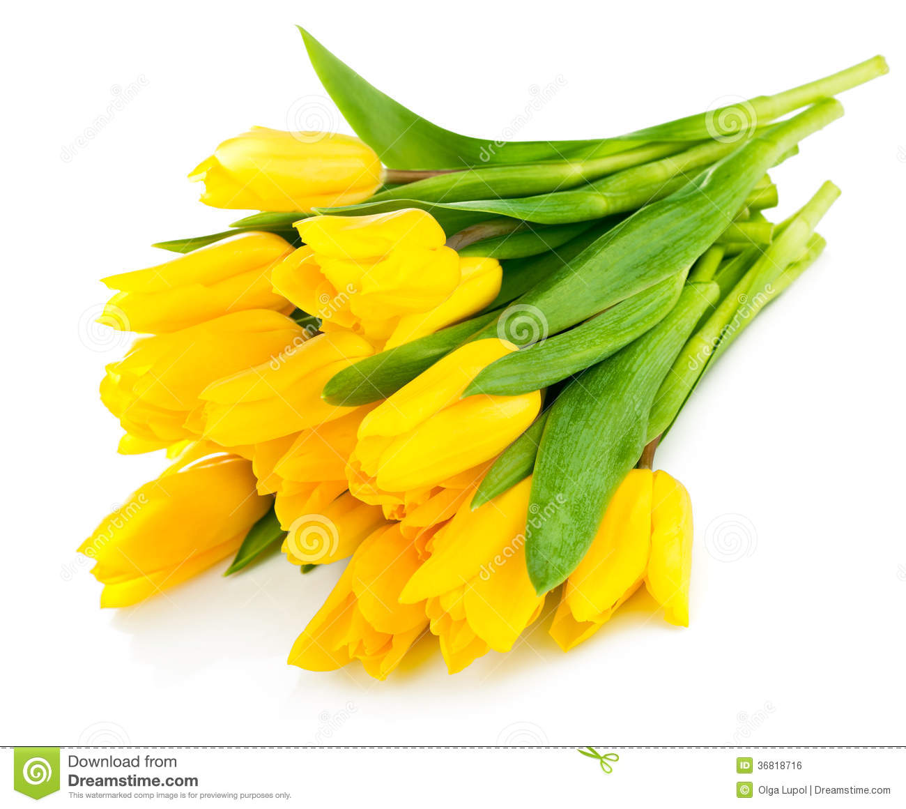 Bouquet Of Yellow Tulip Flowers Royalty Free Stock Image