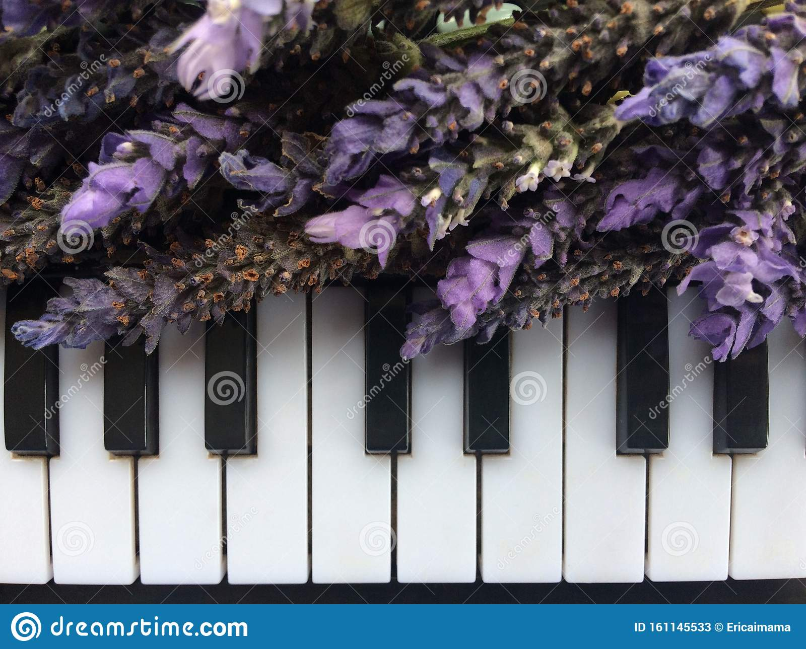 28 157 Piano Keyboard Photos Free Royalty Free Stock Photos From Dreamstime