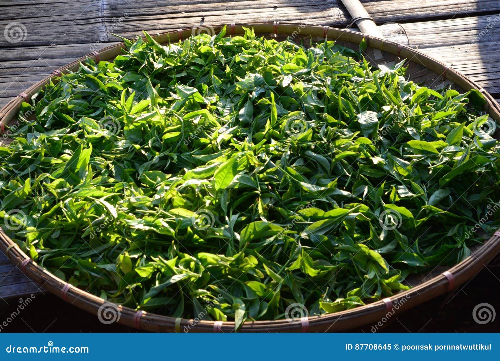 Bourgeon et feuilles de thé sur le panier en bambou