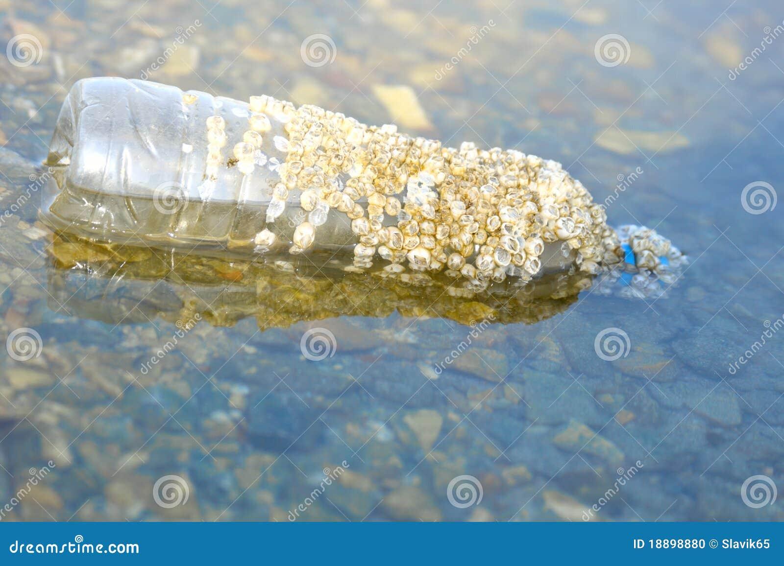 Bouteille en plastique en mer, coquilles de coque saisies
