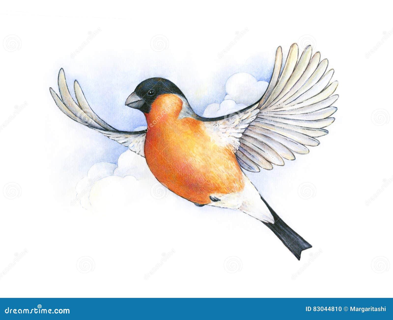 Bouvreuil d 39 aquarelle dessin de travail manuel d 39 oiseau en - Dessin oiseau en vol ...