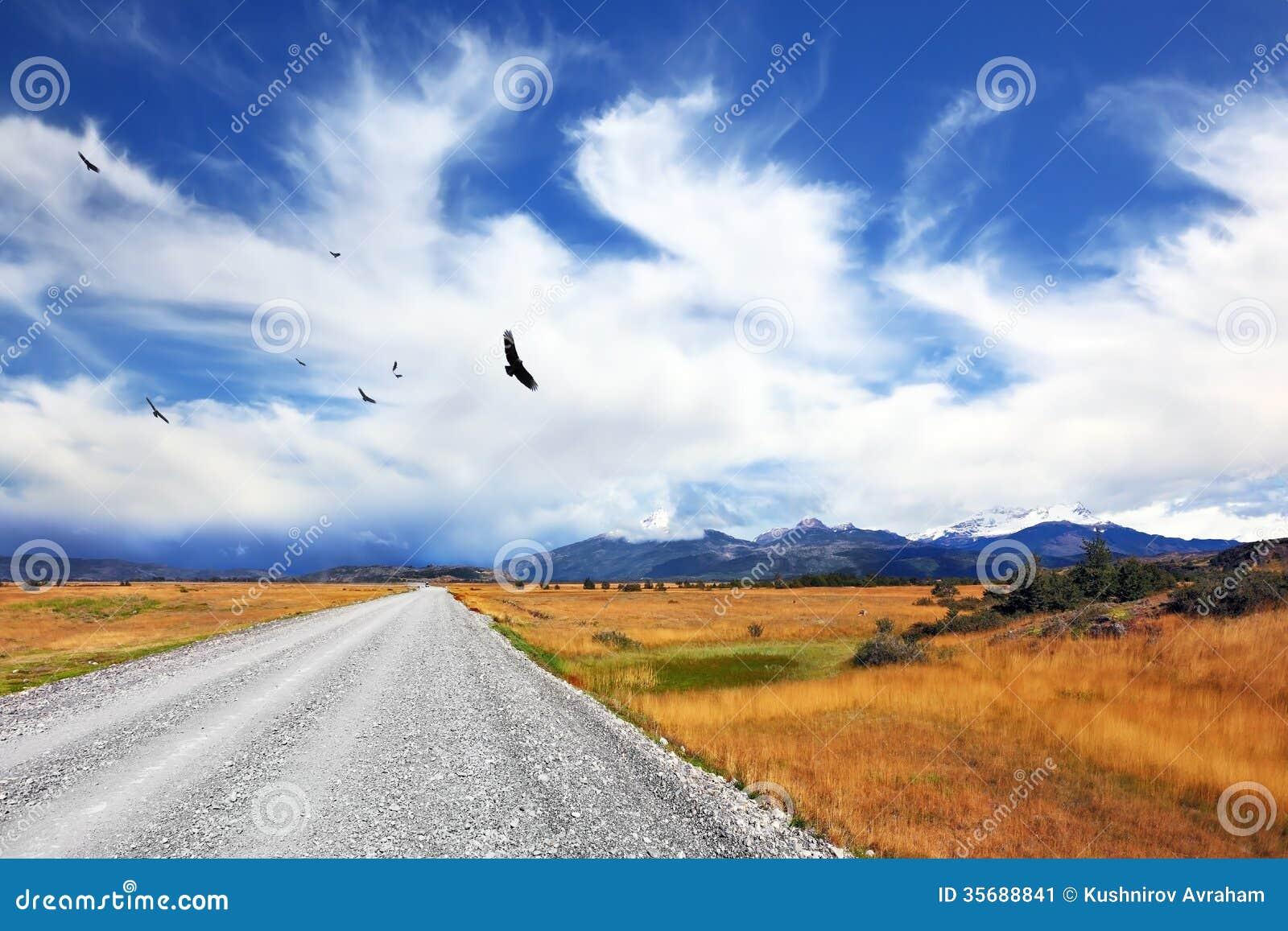 Boven de landweg stijgt de Andescondor