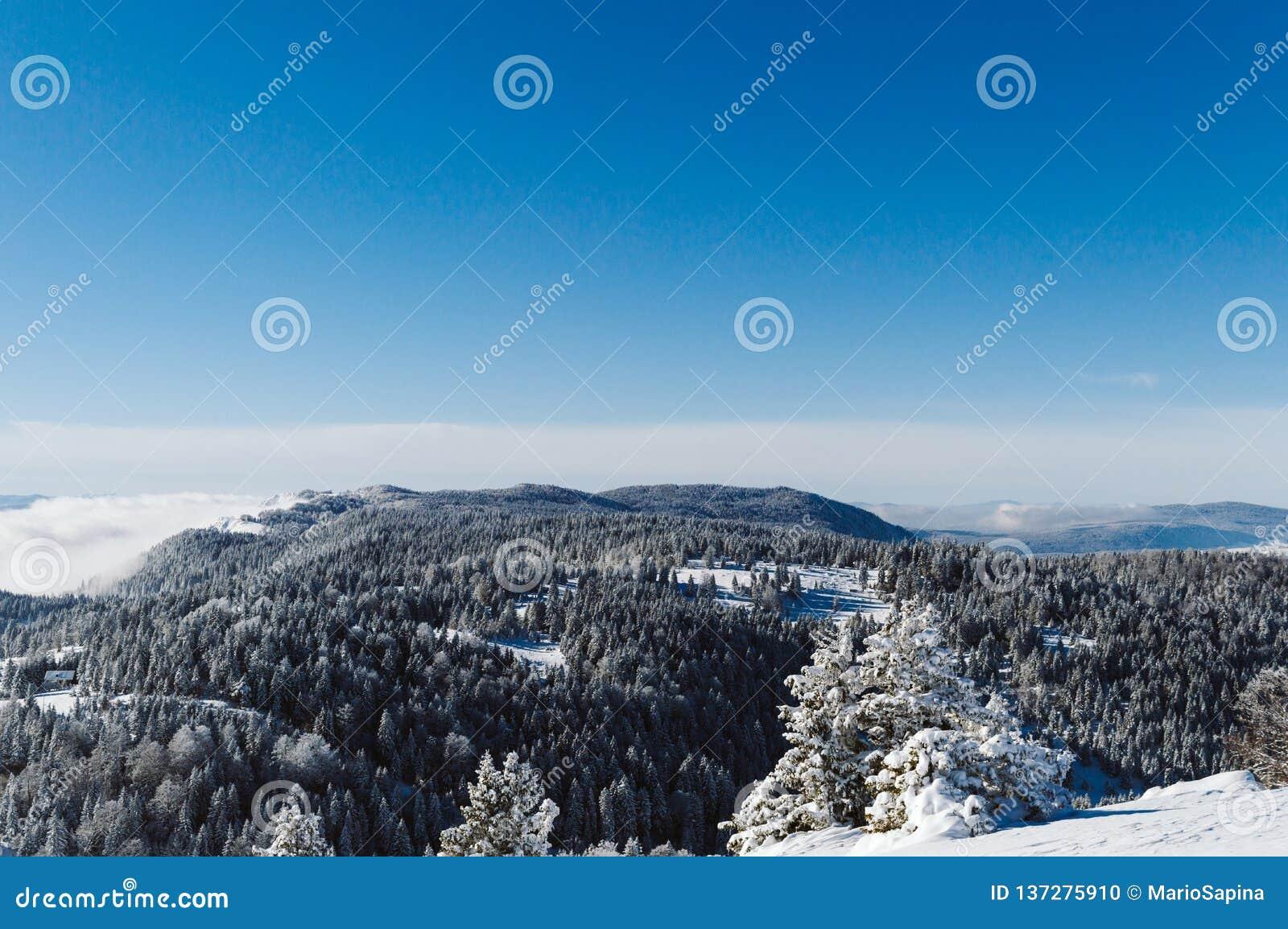 Bovenkant van de bergketting met sneeuw met pijnbomen wordt behandeld en duidelijke blauwe hemel op een zonnige dag die