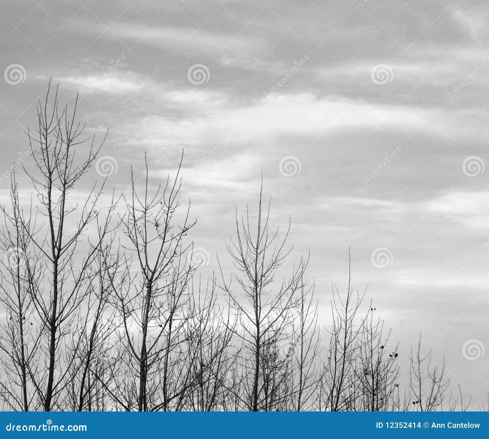 Bovenkanten Van Naakte Bomen In Zwart-wit Stock Afbeeldingen ...