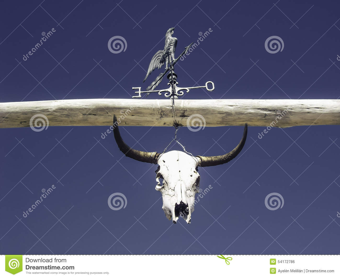 Bovine Skull With Rooster Wind Measuring Instrument Stock Photo