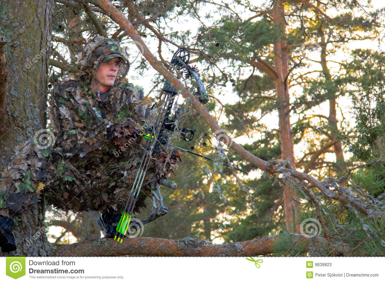 Bow Hunter In Tree Stock Photos Image 8639823