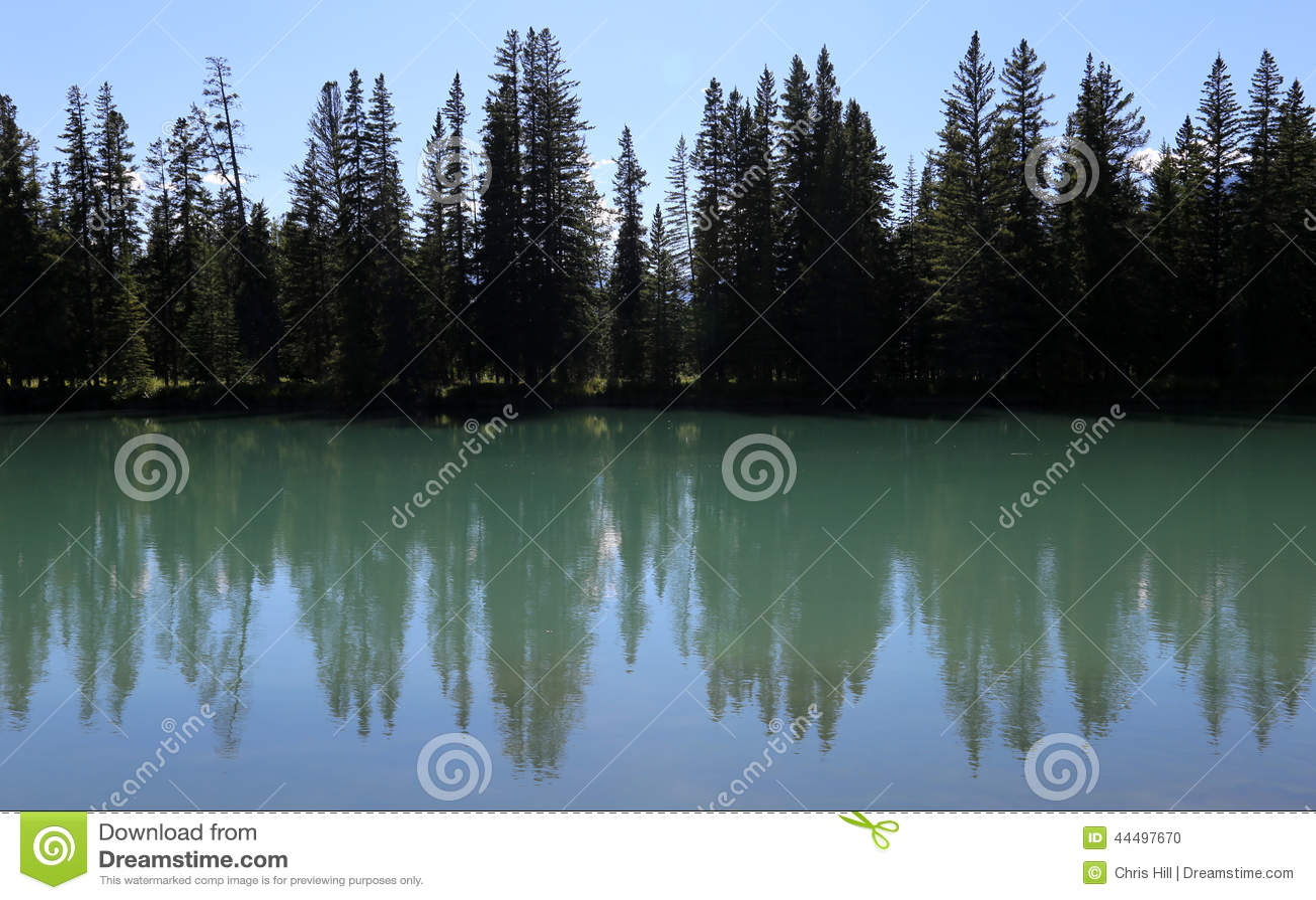 bow river tree line stock photo image 44497670
