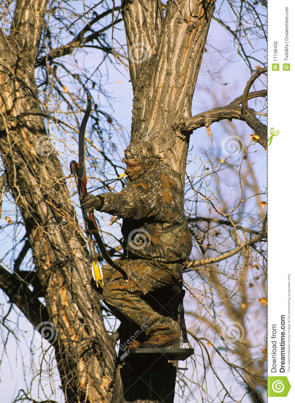 Bowhunter In Treestand Stock Image Image Of Bowhunting