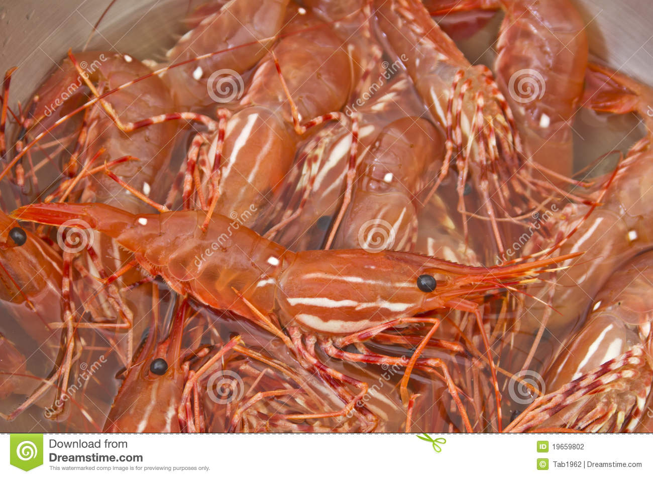 Bowl of fresh live shrimp stock photography image 19659802 for Fishing with live shrimp