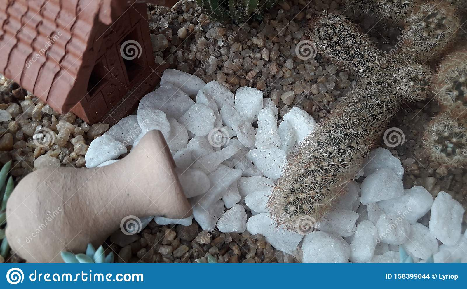 Bowl Of Succulent Cactus And Succulent Terrarium E House Stock Photo Image Of House Bowl 158399044