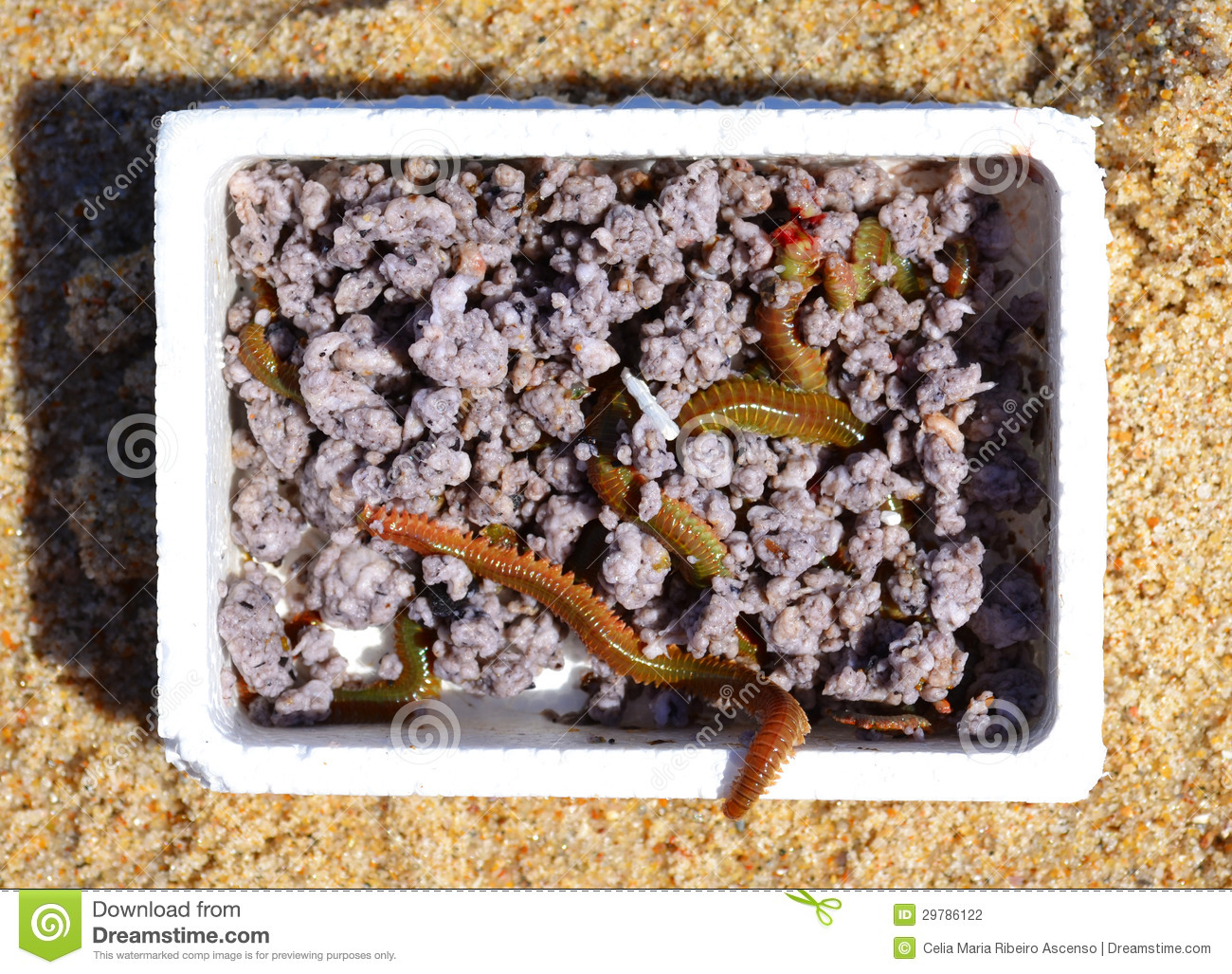 Box of worms fishing bait stock photography image 29786122 for Worms for fishing bait