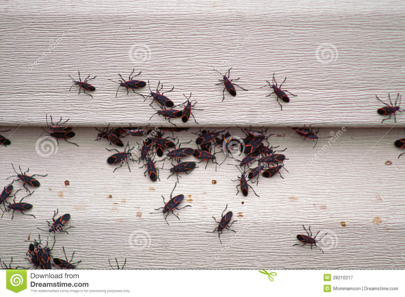 Get Rid Of Ants In Carpet Images Further 43509 Homemade