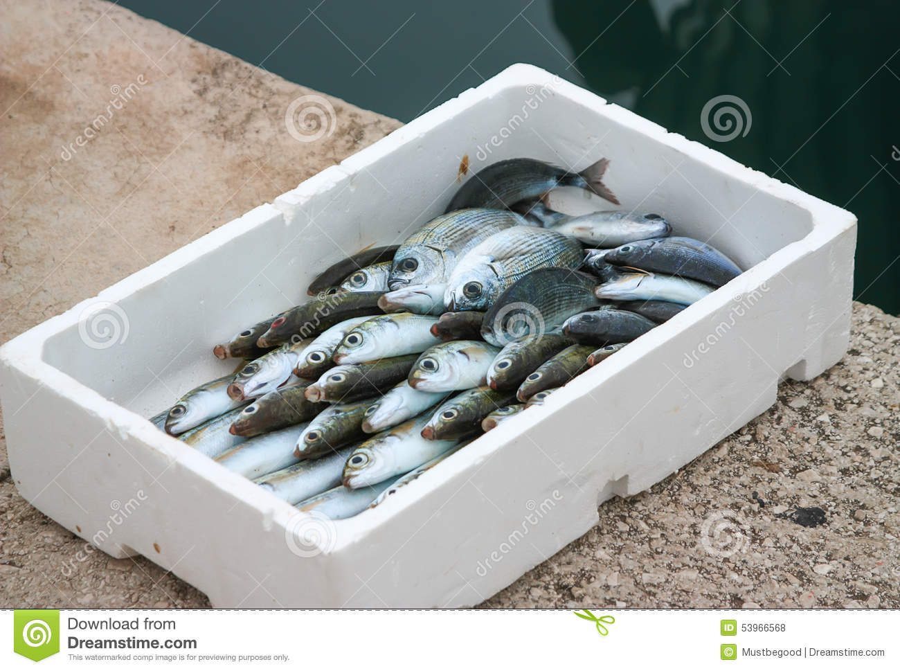 Box with fresh fish stock photo image 53966568 for Fish box for boat