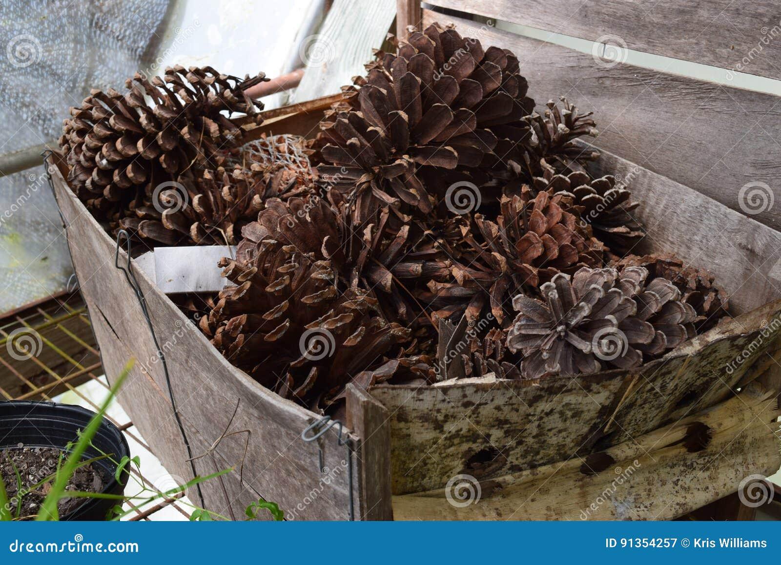 Box of pinecones