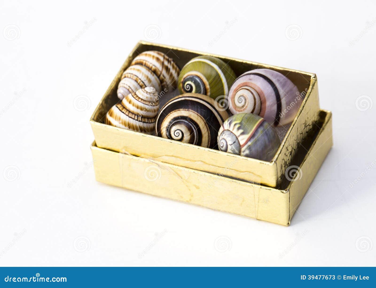 Box of Snail Shells