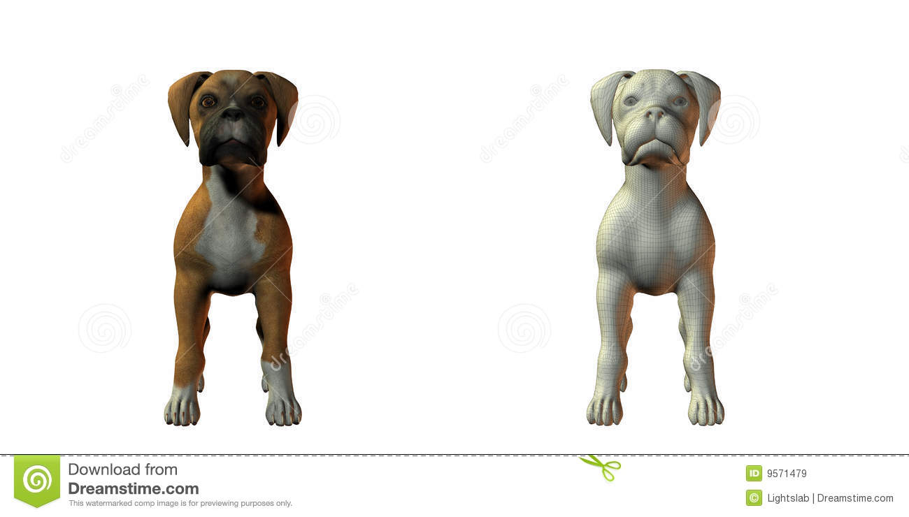 Boxer Dog 3d Model Royalty Free Stock Images Image 9571479