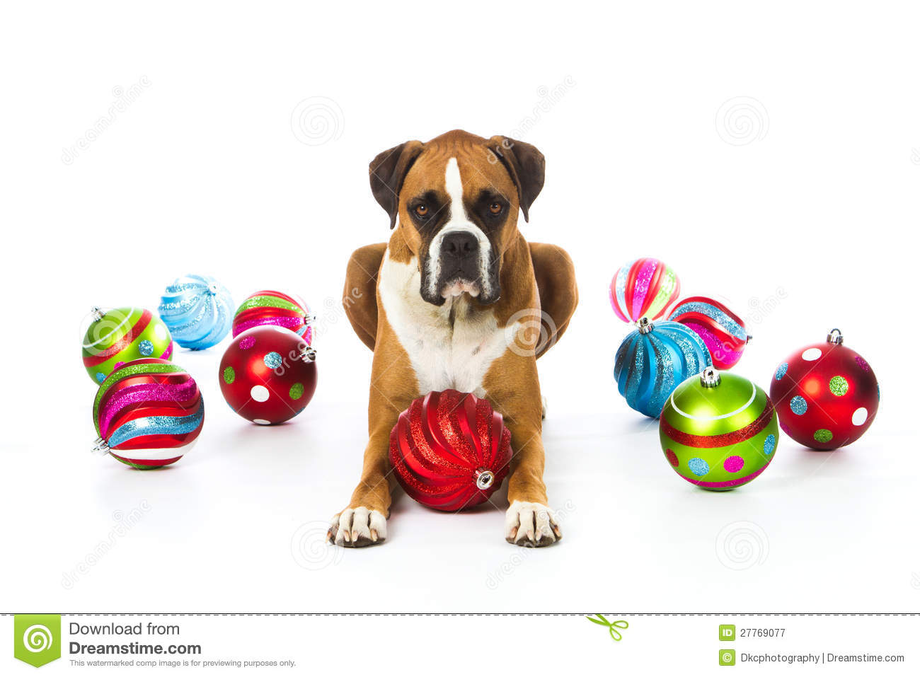Dog christmas ornaments - Boxer Dog With Christmas Ornaments Royalty Free Stock Photography