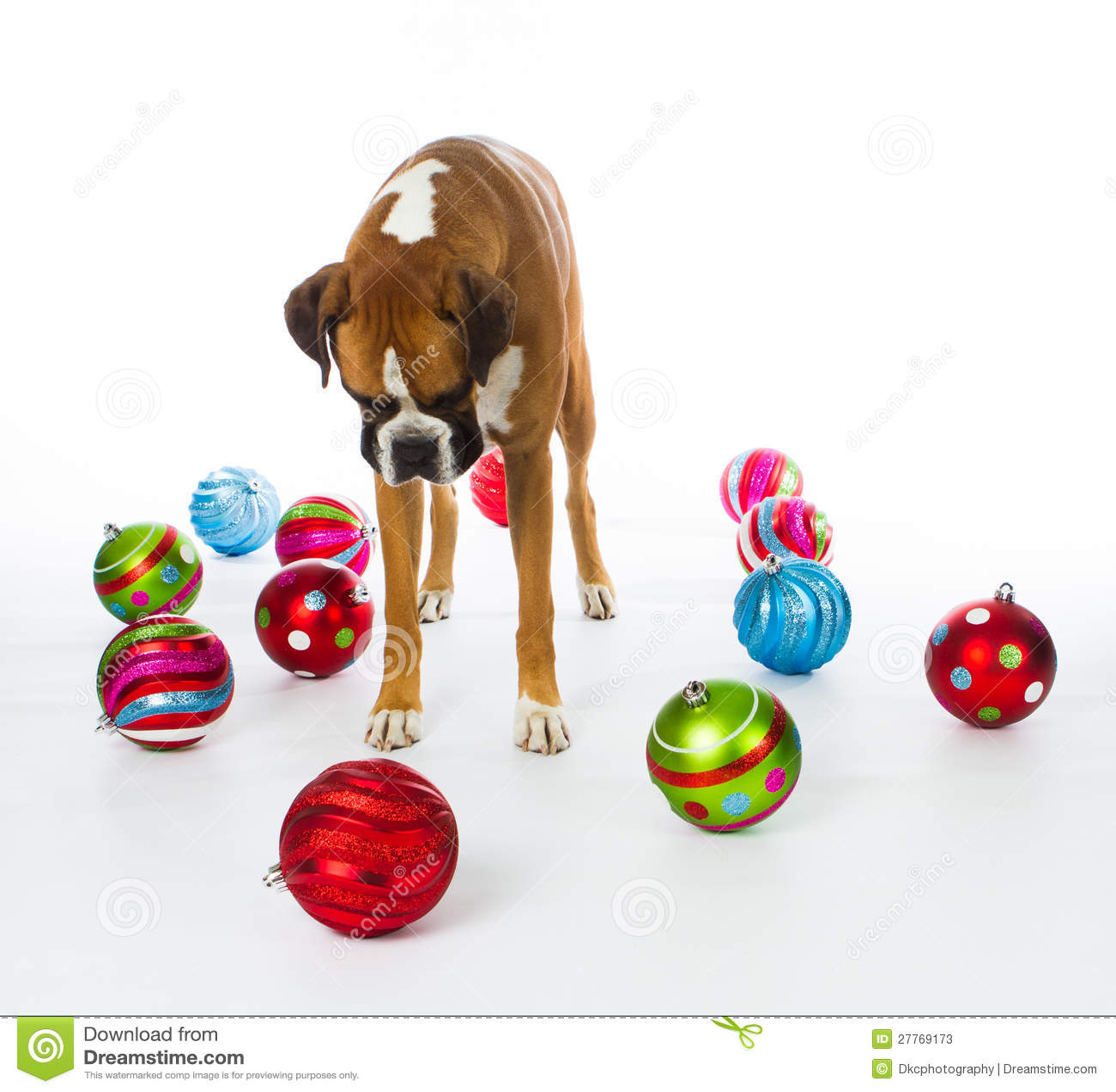 Dog christmas ornaments - Boxer Dog With Christmas Ornaments