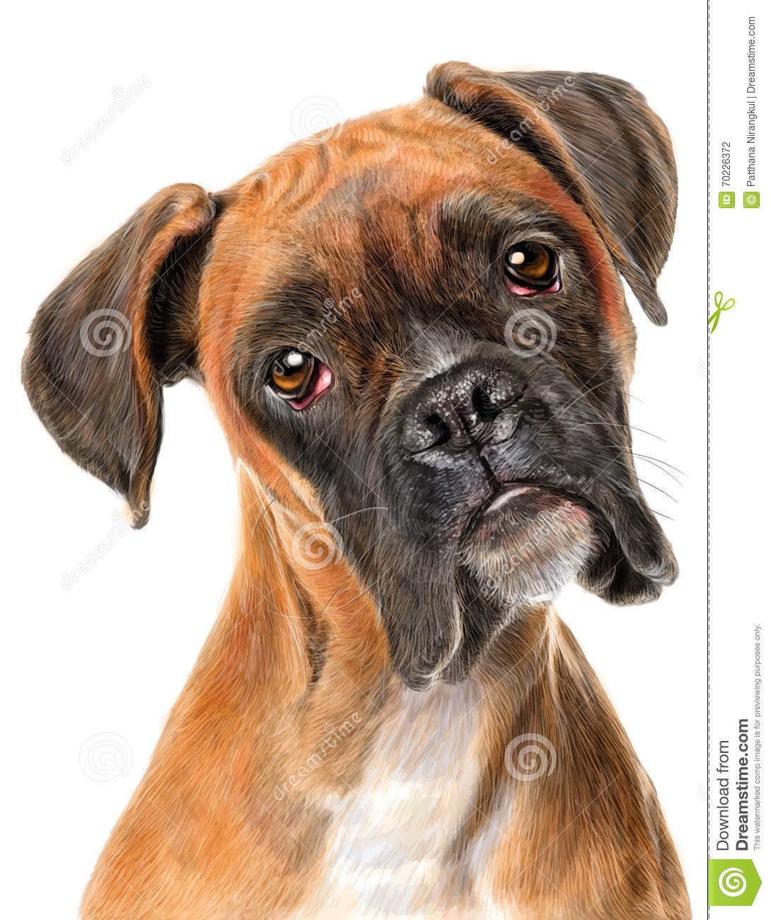 Boxer Dog Stock Vector Image 70226372