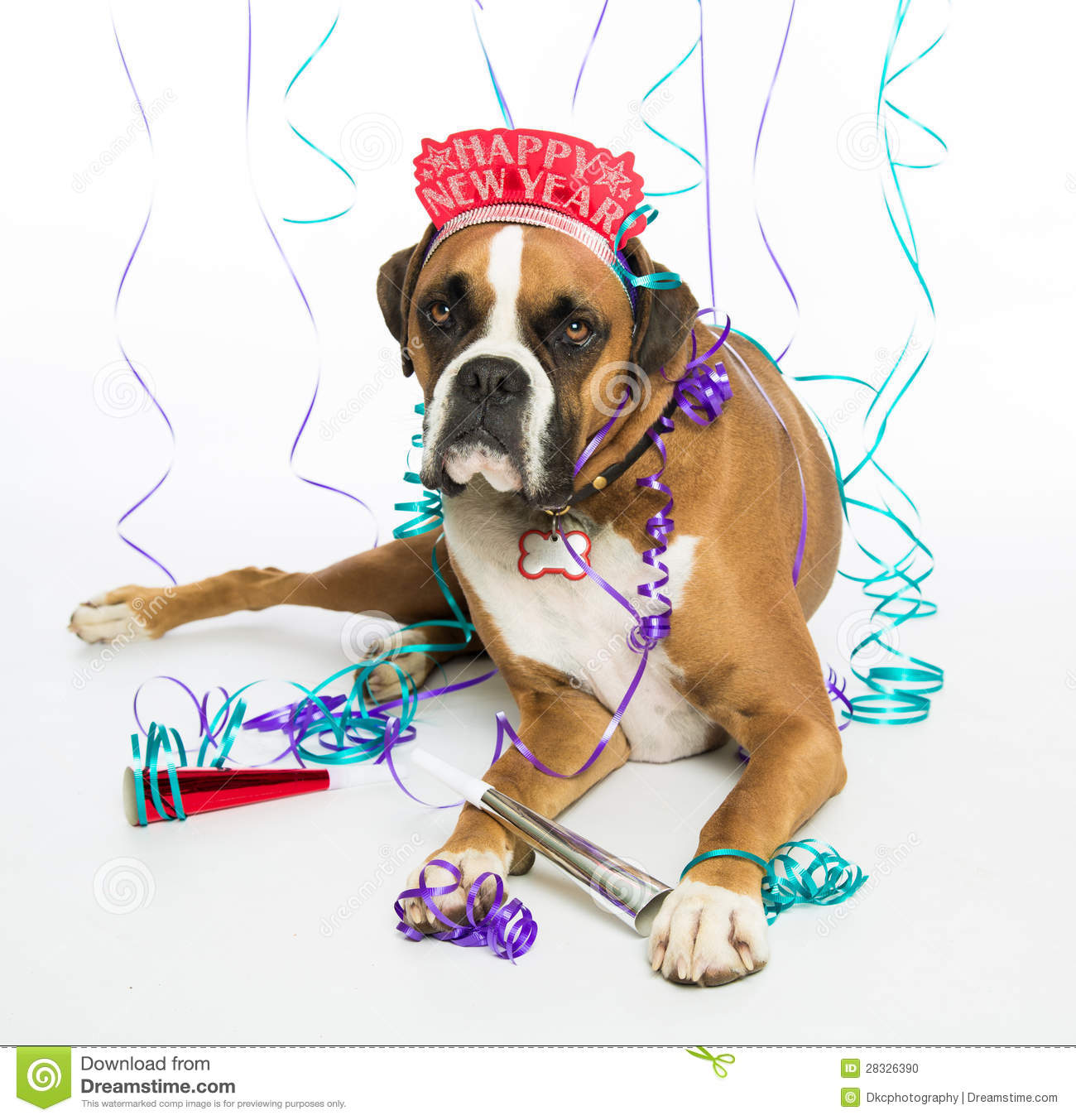boxer dog happy new year