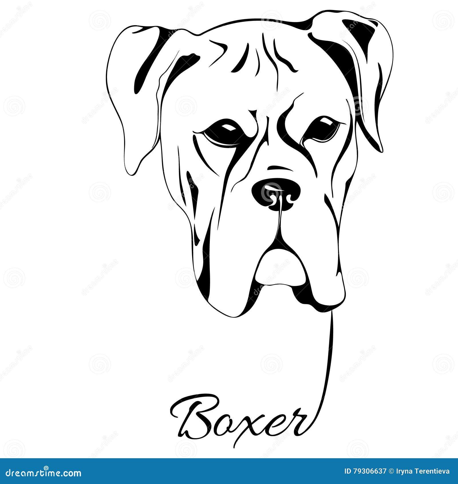 Boxer Dog Head Stock Vector Illustration Of Muzzle Handwriting