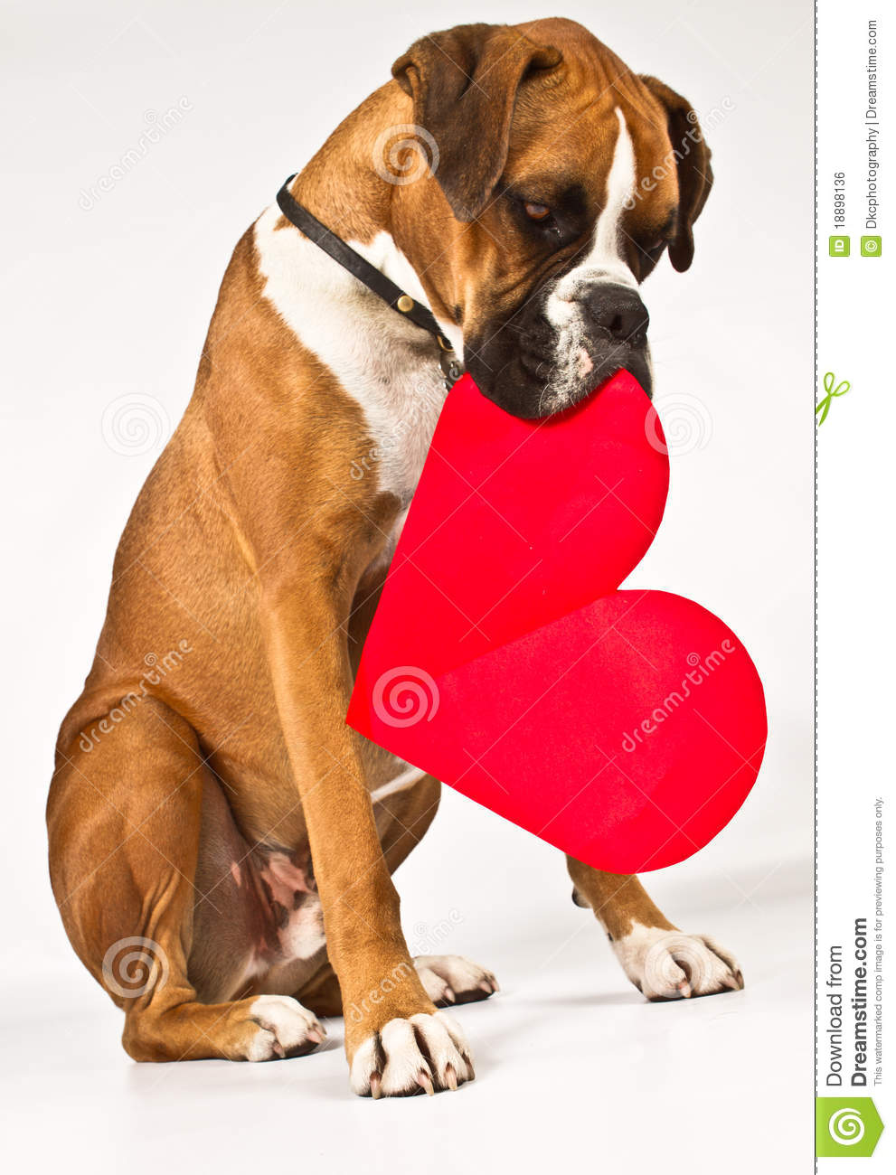 Boxer Dog Heart Image Wiring Diagrams Solar Power Inverter T K Hareendran 4047 Inverters Chargers With A Stock Photo Of Sitting 18898136 Rh Dreamstime Com Slogans