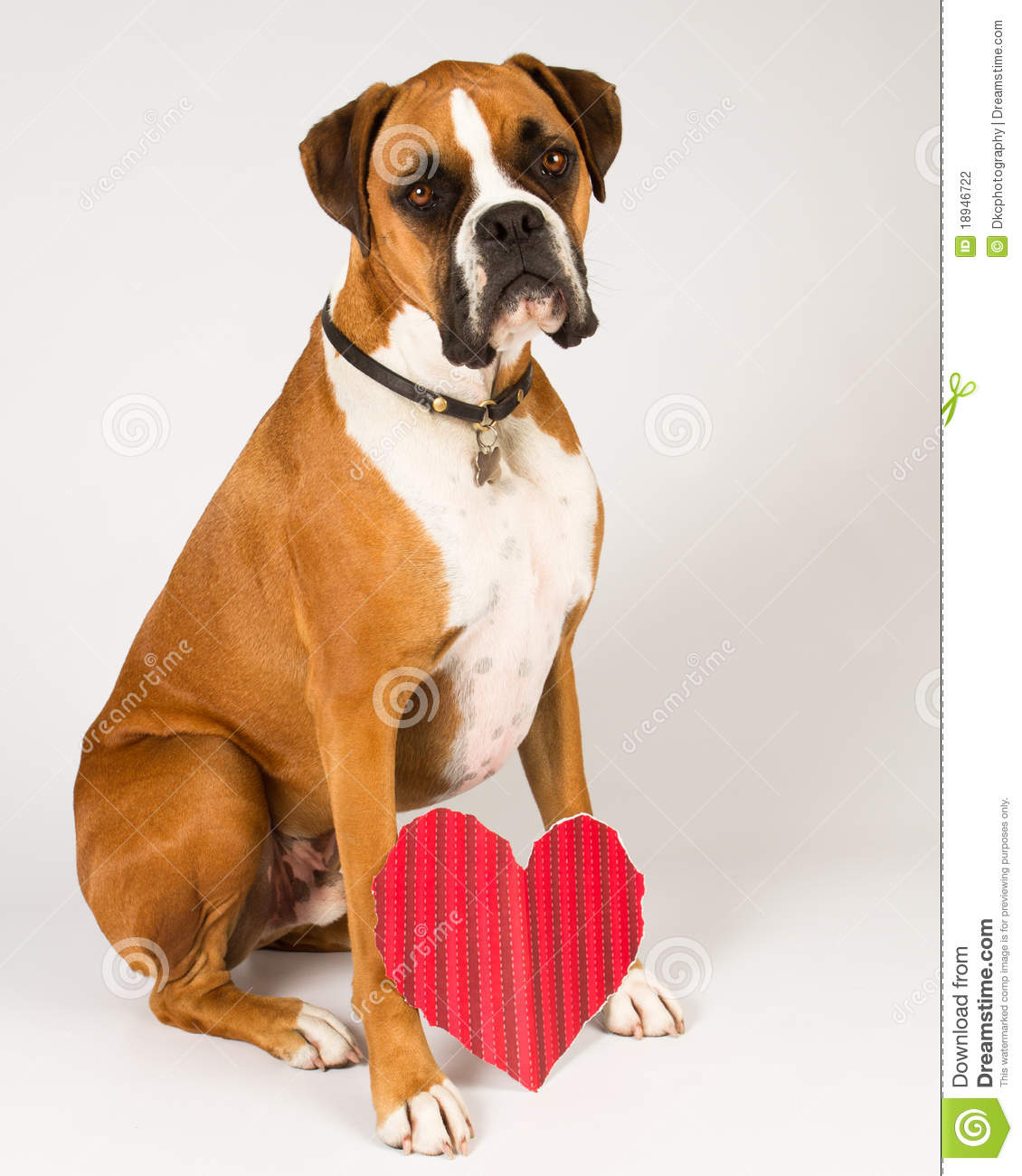 Boxer Dog Heart Image Wiring Diagrams Solar Power Inverter T K Hareendran 4047 Inverters Chargers With A Stock Photo Of Fawn Flashy 18946722 Rh Dreamstime Com Happy